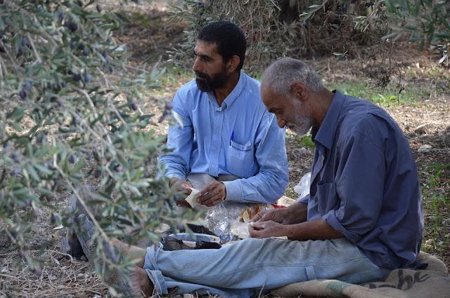 Syrian refugees harvesting olives in Lebanon. Credit: pixabay.com